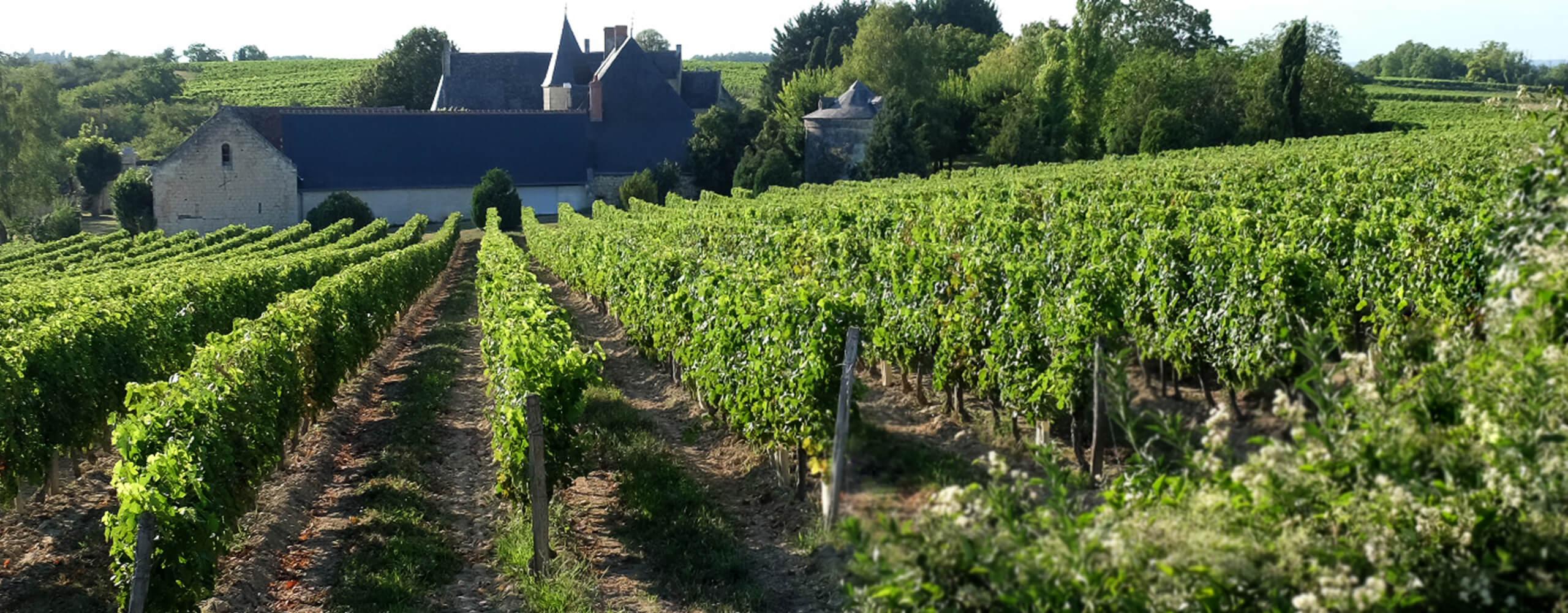 Clos de Danzay, vignobles AOC Chinon exploité, par Angélique Léon